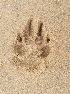 L'impronta di Schoep sulla sabbia del lago