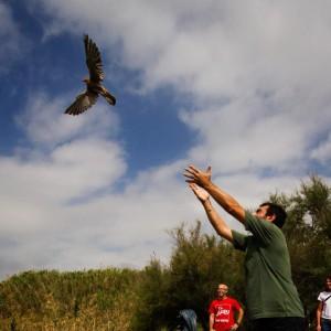 Il presidente Lipu, Fulvio Mamone Capria, rilascia in natura un rapace curato da un Centro recupero Lipu