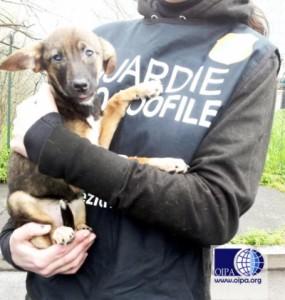 Camilla, la cagnolina malata e denutrita sequestrata ad un accattone da Oipa Milano