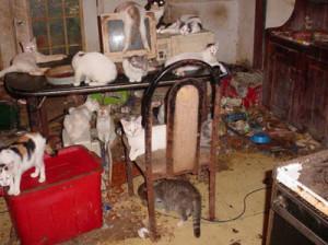 animal_hoarding