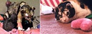 Scarlet prima e dopo