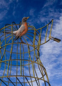 Bird ready to fly away from golden cage