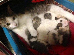 Lurlene con i suoi piccoli