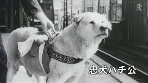 Hachikō in stazione