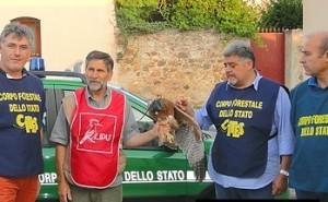 L'aquilotto del Bonelli prima del rilascio (foto Cites)