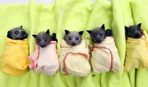 pipistrelli nursery