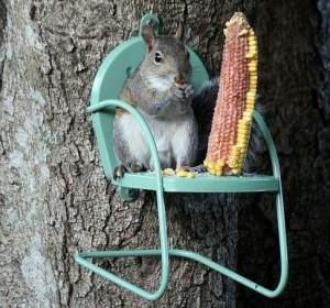 scoiattolo mangiatoia