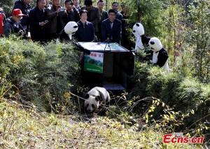 Il momento della liberazione di  Zhang Xiang