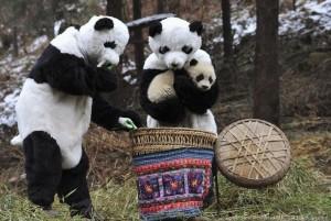 Un piccolo panda con i ricercatori travestiti da genitori