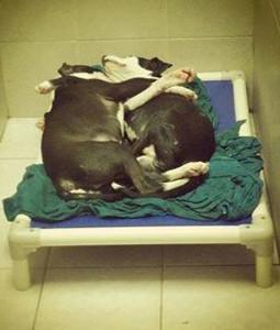 La foto che ha commosso il web: Jeffrey e Jermaine dormono abbracciati appena tolti dalla strada