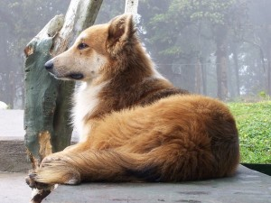 Lui aspetta te, adotta un cane anziano!