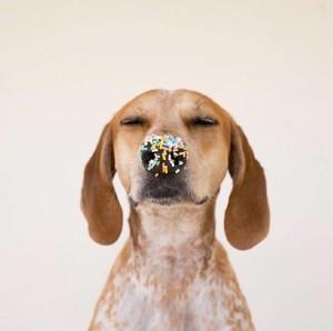 zucchero cane