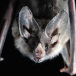 Villa Ada, installate BatBox per il pipistrelli