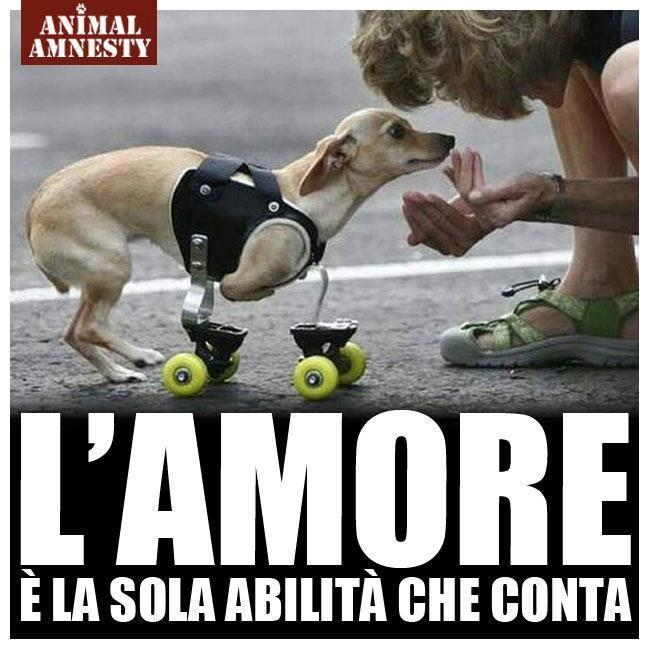 Bien-aimé Carrellini per animali disabili, dove trovarli | YouAnimal.it DJ89