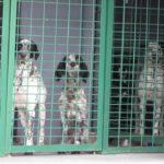 """""""Ricomincio da cane"""" per salvare i cani della Croazia"""