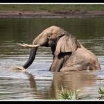 Zulucam, live gli animali di Temble Park (Sud Africa)