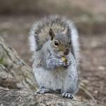 ACTION! Firma e diffondi per gli scoiattoli di Perugia