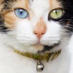 Come mai gli occhi dei gatti si illuminano al buio?