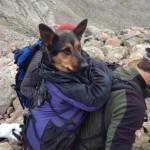 Missy, lasciata in montagna, salvata via Facebook