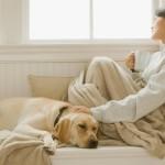 Animali e condominio: vietato vietare il pet