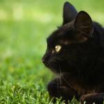 Gatti liberi tutelati anche se vivono nei condomini