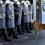 Grecia, cani in prima linea nelle proteste di piazza