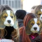 Fare attivismo per gli animali: come e perché