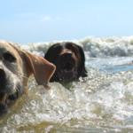 Riapre il Baubeach, la spiaggia per i cani alle porte di Roma