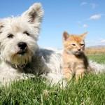 Fare testamento a favore degli animali