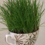 Tazzina riciclata per l'erba gatta