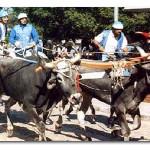 ACTION! Contro la corsa dei buoi a Chieuti (Foggia)