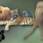 """La Forestale: """"Molti zoo non rispettano la legge"""""""