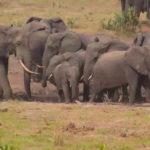 Webcam live sugli animali del Tembe Elephant Park (Sudafrica)