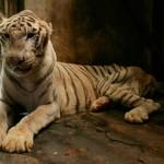 Una firma per gli animali detenuti in condizioni pessime nel Surabaya Zoo (Indonesia)