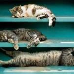 Gatti in condominio tutelati come gli uccelli sugli alberi