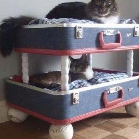 Fai da te dalla valigia alla cuccia per il pet - Cuccia per cani da interno fai da te ...