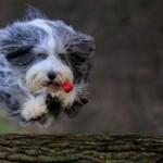 Come mantenere il cane attivo in casa?