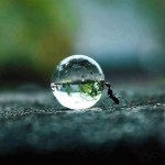 Come allontanare le formiche rispettando la loro vita