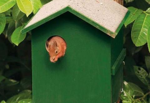 nido scoiattolo