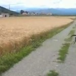 Quando un cane è felice [Video #LoL]