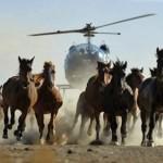 ACTION! Petizione per i cavalli selvatici australiani condannati a morte