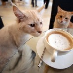 """A Parigi il primo """"bar dei gatti"""""""
