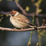 Uccelli comuni in Italia. Un opuscolo da scaricare