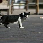 Come ritrovare un gatto smarrito