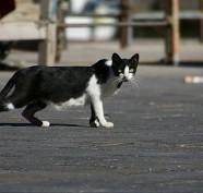 gatto-sulla-strada