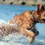In spiaggia con il cane. Gli stabilimenti  dog-friendly