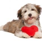 Gli animali da compagnia fanno bene al cuore