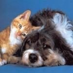 Salva il tuo animale con le manovre di rianimazione
