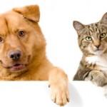 Trovare casa in affitto se si hanno animali domestici