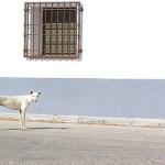 ACTION! Firma e diffondi per i levrieri abusati in Spagna